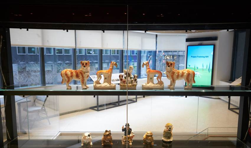 Come. Stay. Museum of the Dog opens in New… - news of today