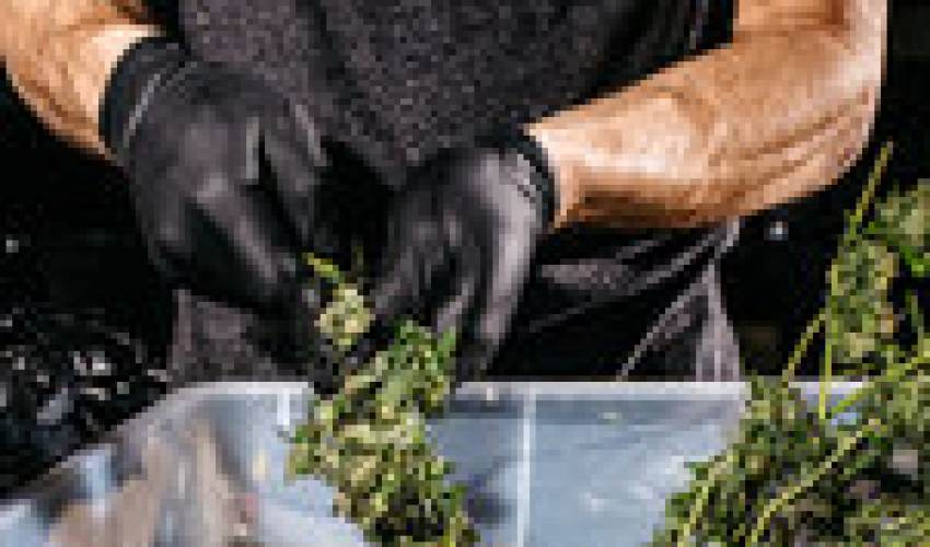 Legalizing Marijuana, With a Focus on Social… - news of today